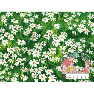 Green meadow daisy