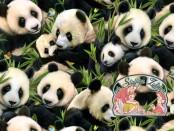 Panda bears cotton