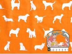 Dog show orange