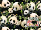 Panda bears cotton