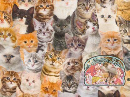 Trixie cats canvas